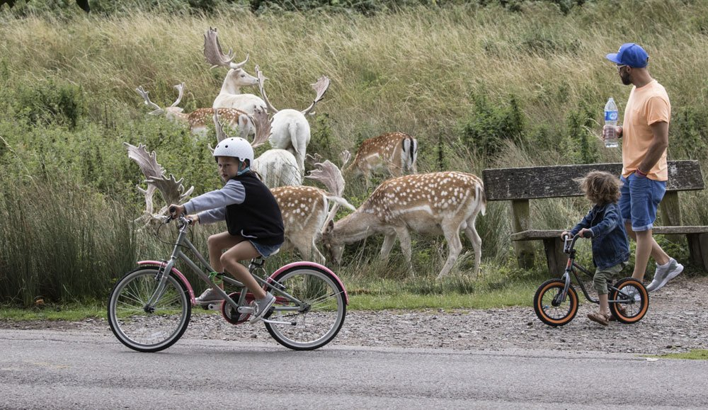 A young family visiting Bradgate Park with Children on bikes