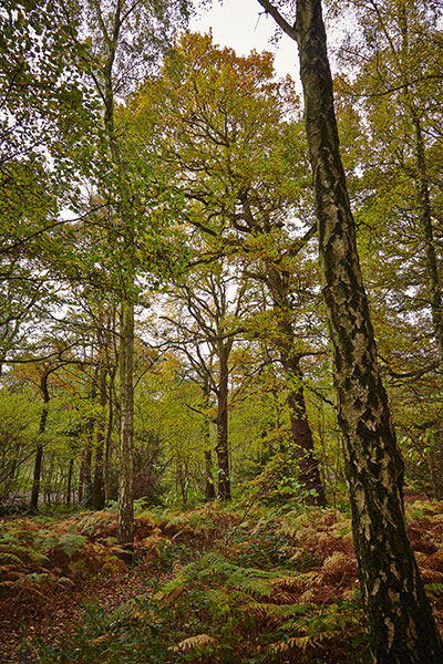 Tree Species in Swithland Wood