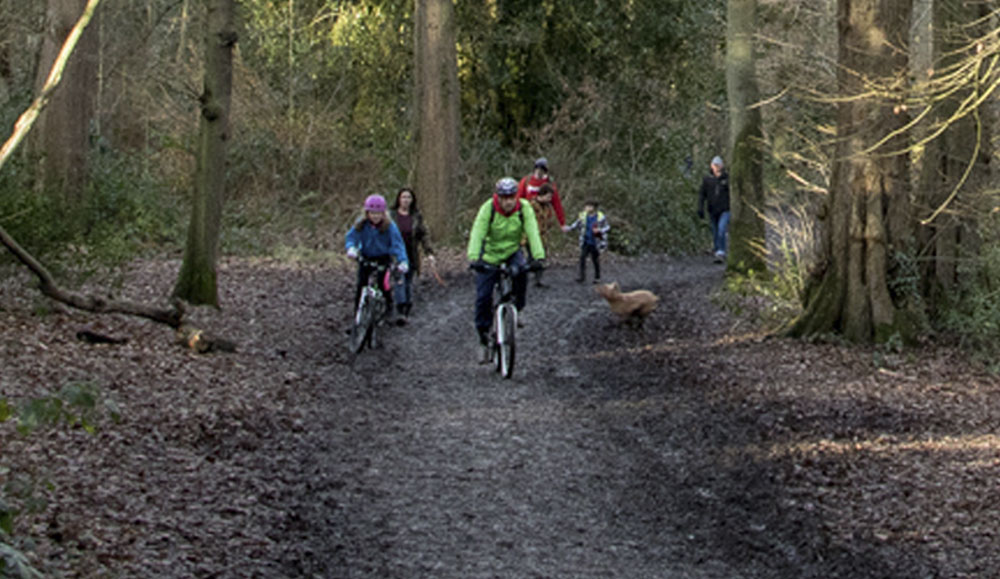 Cycling in a Family Freindly way in Swithland Wood