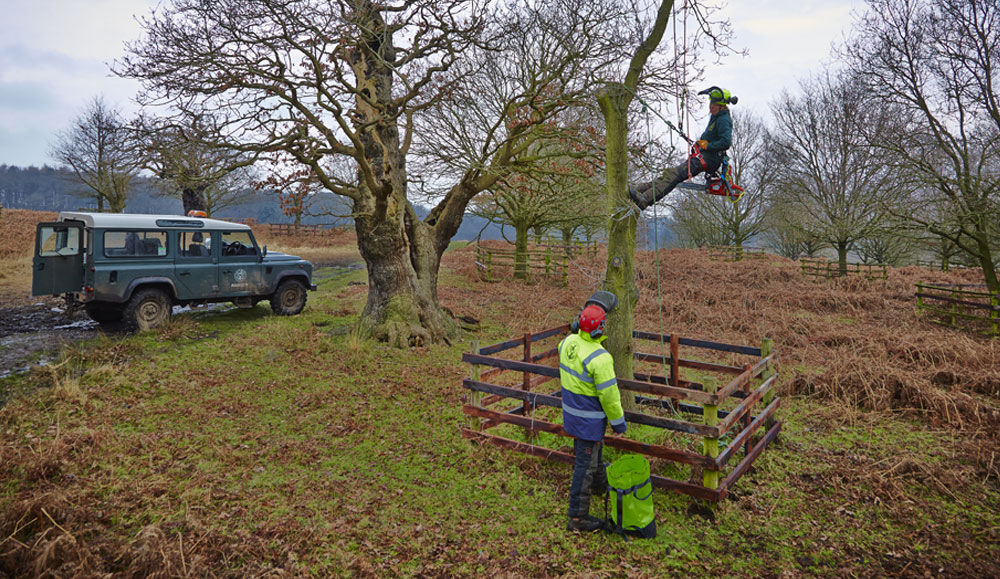 Tree Coppicing in Bradgate