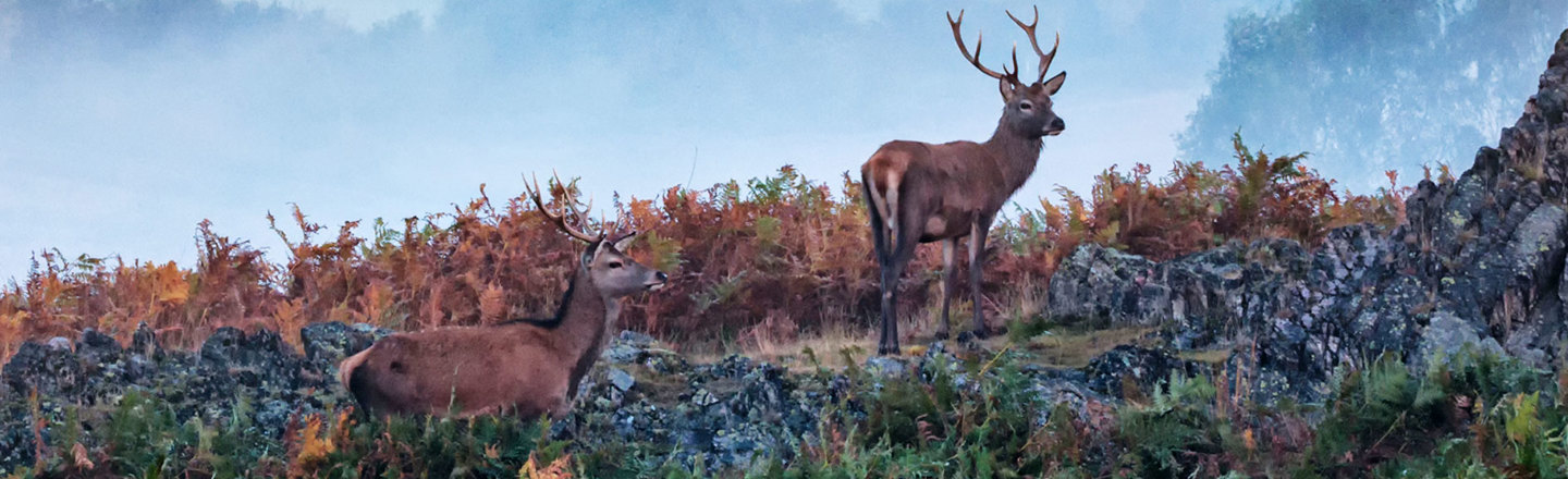 Image of Deer in Bradgate