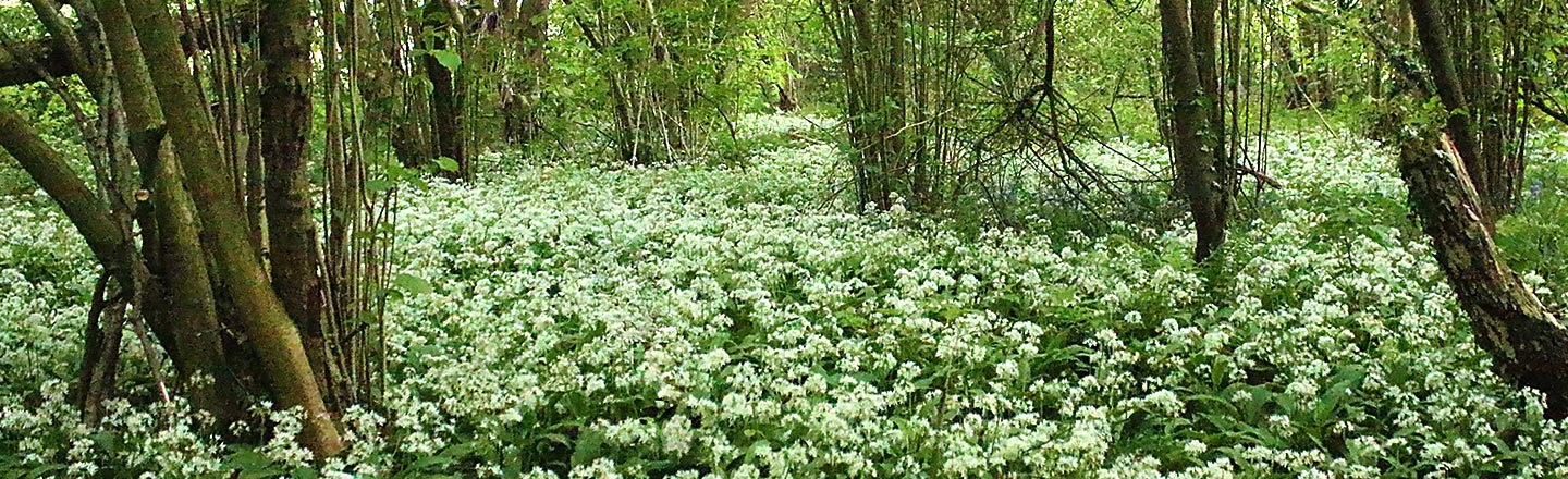 Spring Flowers in Swithland Wood