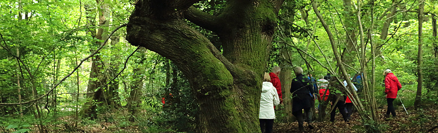 Visitors trek through Swithland Wood to discover the diversity