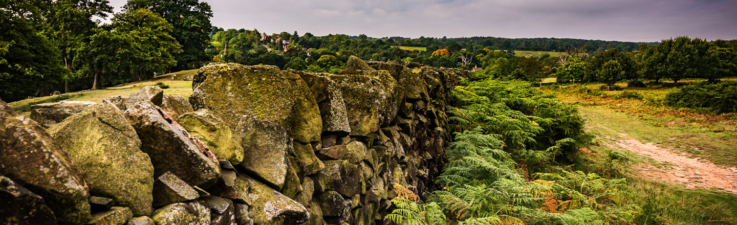 Jon Pearson Bradgate Park landscape with dry stone wall featured