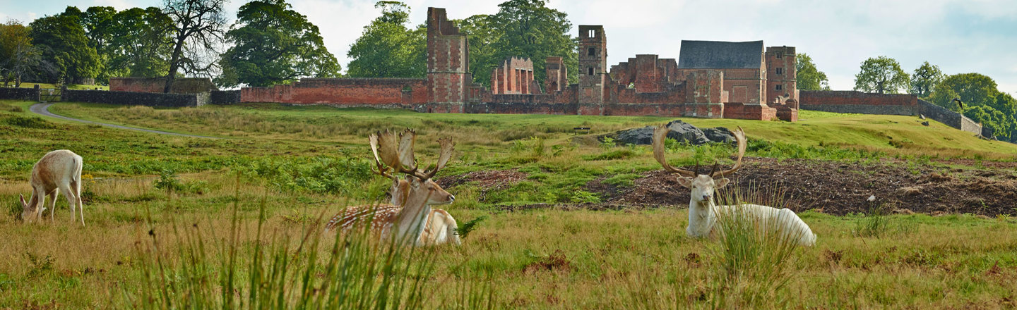 Bradgate House and the Deer Herd